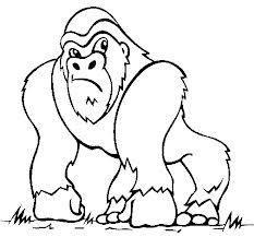 Santo Antônio do Sudoeste: Populares afirmam ter visto Gorila
