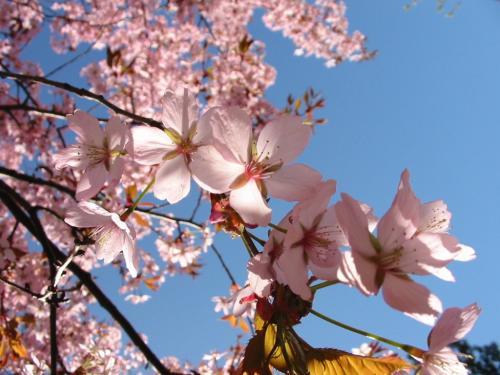 Primavera começa e estação será marcada pela chuva