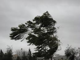 Casas foram destelhadas com o vento em Capitão